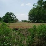 14 acres of agriculture farmland, bordering village..14 nos Tamarind trees.